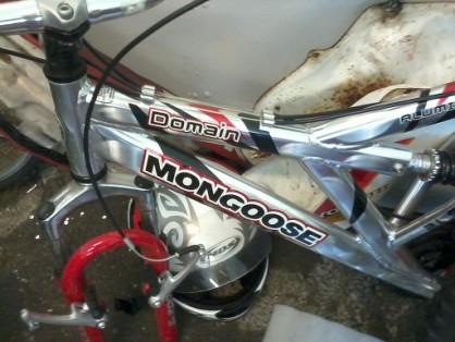 stulen-mongoose-kungsbacka